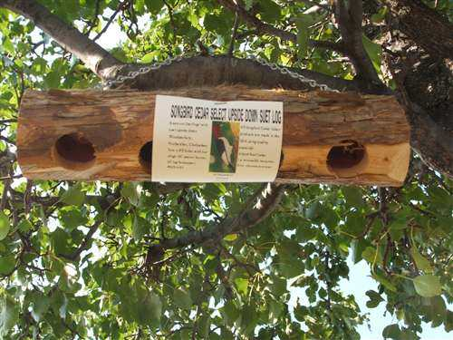 Woodpecker Feeder Consejos - Woodpecker-Feeder.com