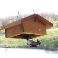 starling-resistant-bird-feeder